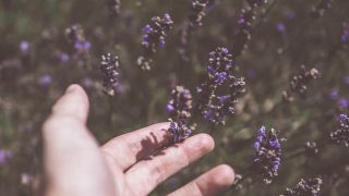 hand in patchouli