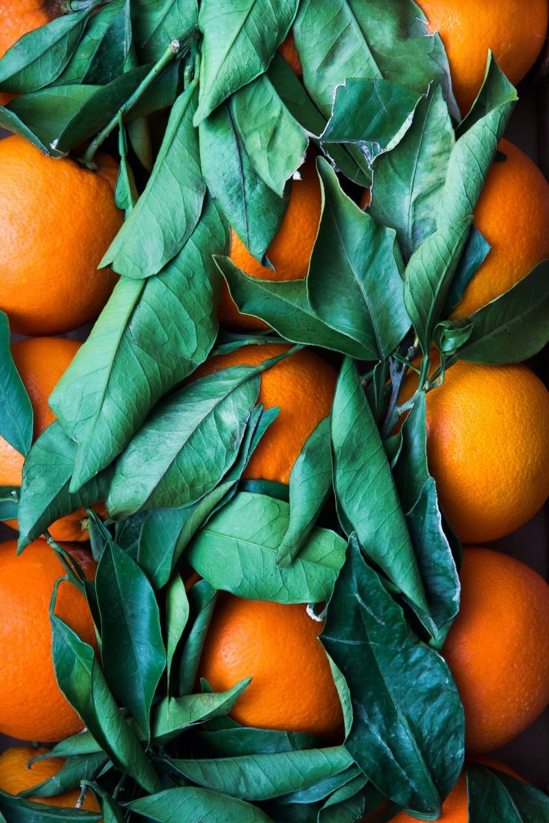 citrus-cologne