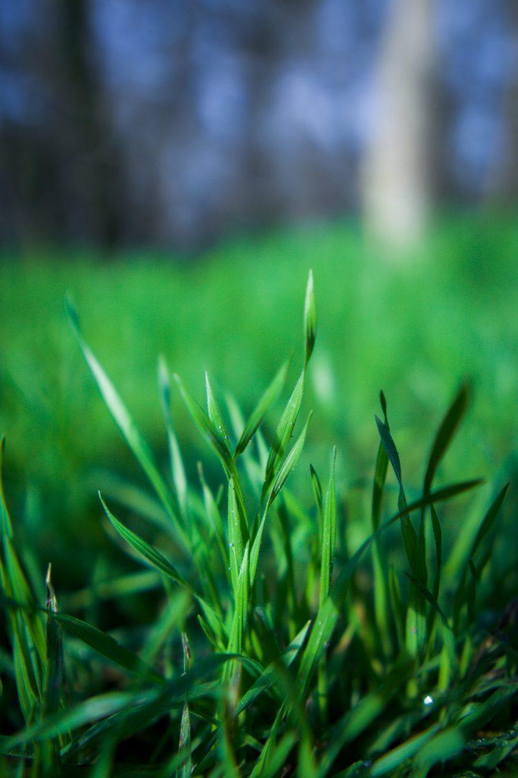 grass unisex